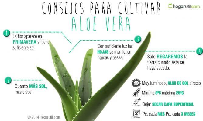La planta de aloe vera plantas y flores - Como es la planta de aloe vera ...