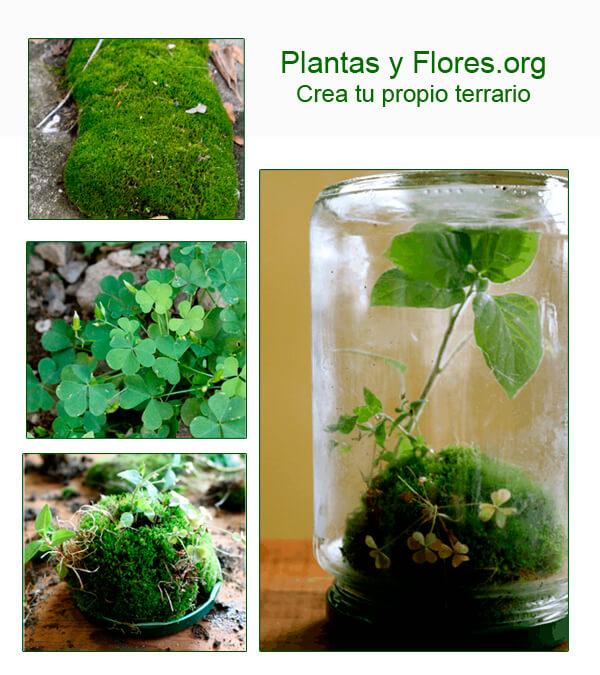 como hacer Terrario de plantas