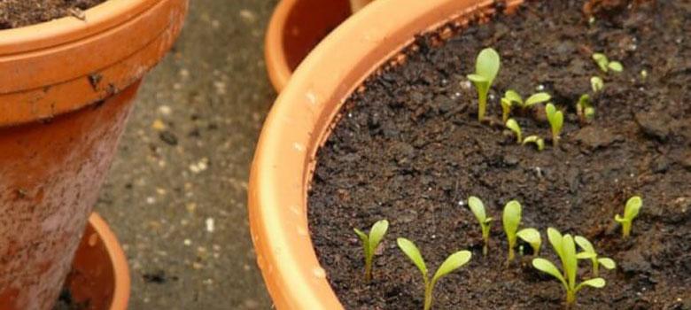plantas que sembrar en junio