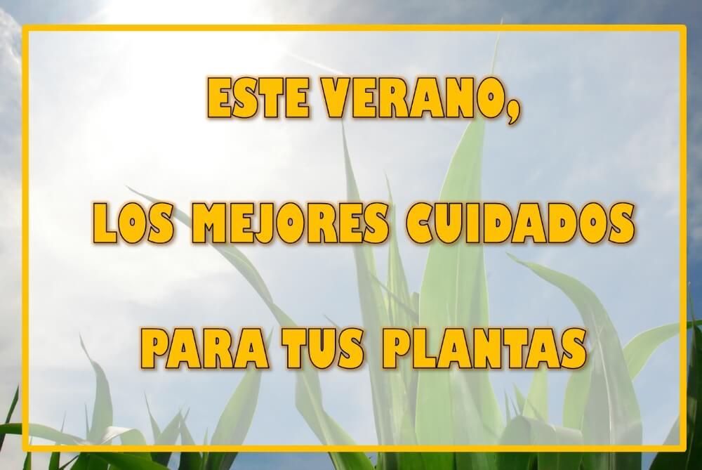 cuidados-verano-plantas
