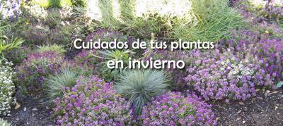 cuidados plantas en invierno