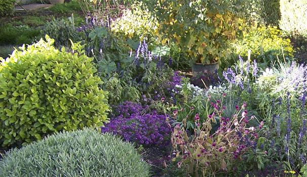 jardin en inverno