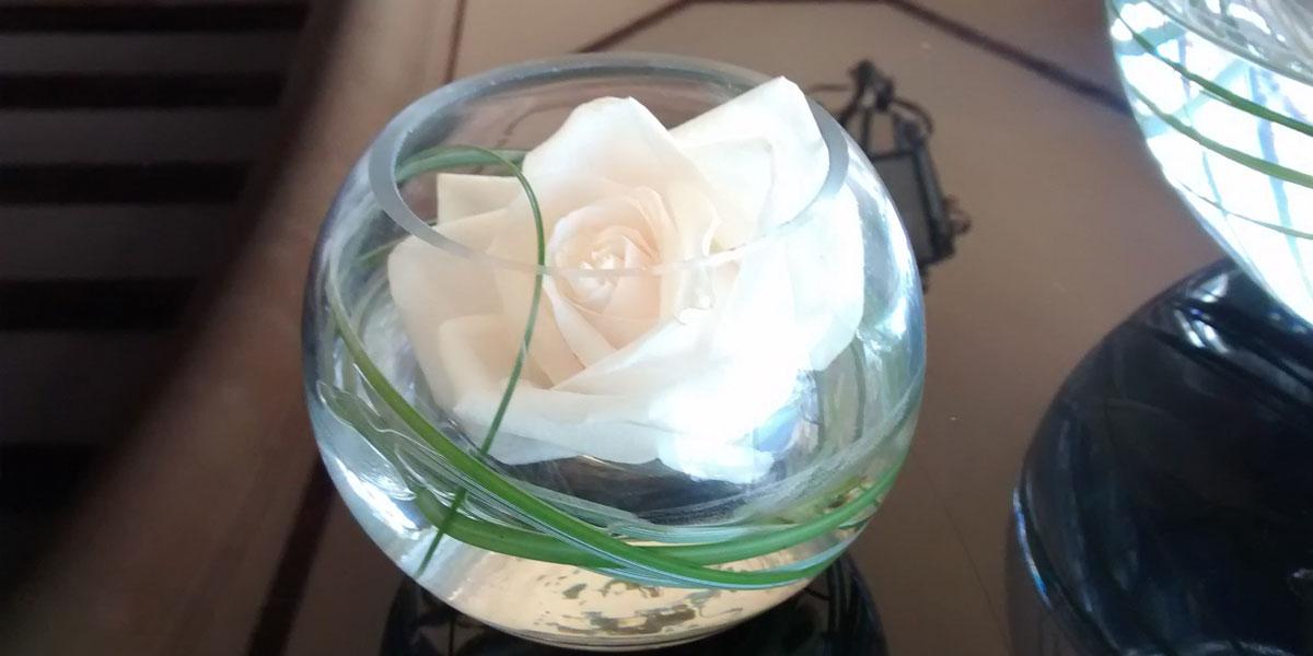 rosa blanca cortada