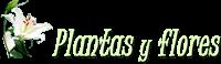 Plantas y Flores Logo